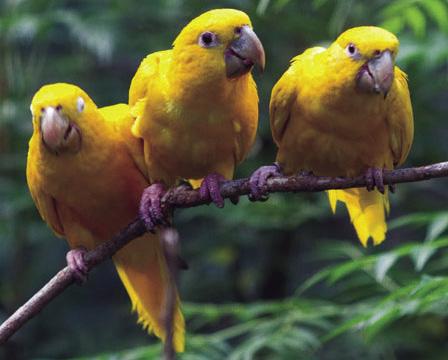 Resultado de imagem para papagaio cheio de penas