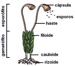 Biologia Enem