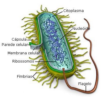 Envoltórios celulares Biologia Enem