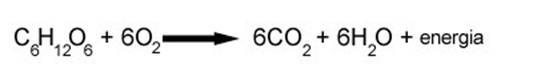 Image result for respiracao celular mitocondria