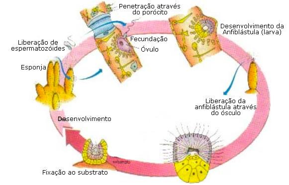 Origem da bioquimica