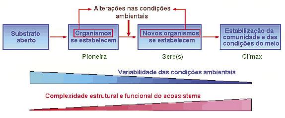 figura17.jpg