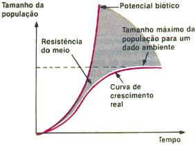 figura19.jpg