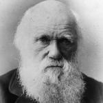 Biologia Revisão de evolução: Darwin e a Seleção Natural