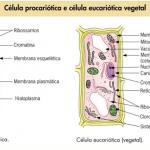 Biologia – Revise os termos: uni / pluricelular, eu / procarionte, auto / heterótrofo!
