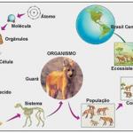 Biologia – Revise as características básicas dos seres vivos