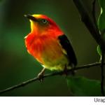 Biologia – Revise as aves com o Blog do Enem!