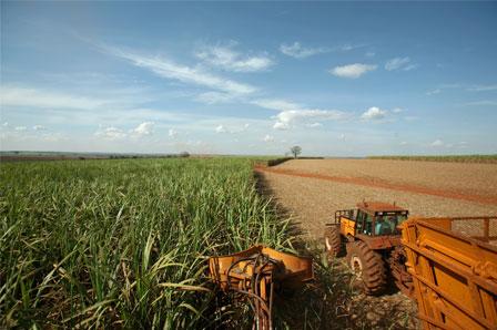 As principais atividades Agrícolas no Brasil - Geografia Enem