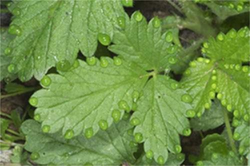 Tecidos vegetais 2 – Revisão de Biologia para o Enem