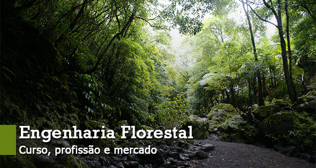engenharia-florestal