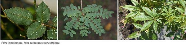 Tipos de folhas