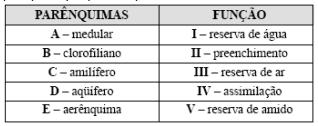 Tecidos vegetais UFSC