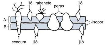 biologia 2 - membrana plasmática