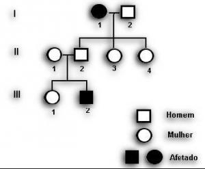 Biologia Árvore Genealogica