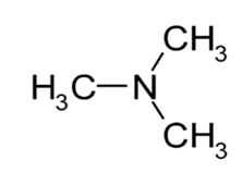 Química- Amina