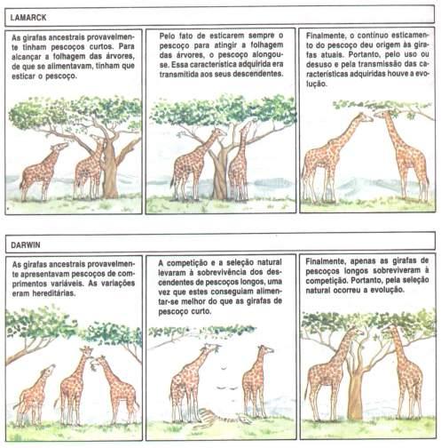 Girafas - Lamarck vs Darwin