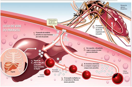 Doença Protozoários