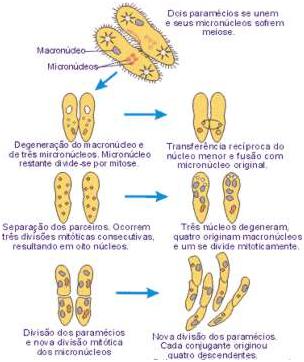 Protozoários