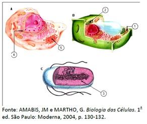 Reino Monera - Bactéria