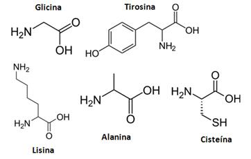 Cadeia aminoácidos