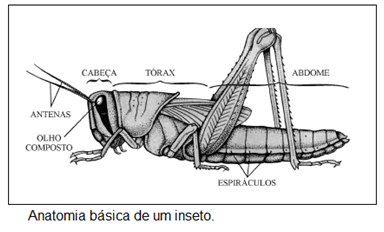 Anatomia insetos