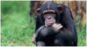 Primata - Mamíferos