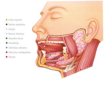 Sistema Digestório - Enzimas - Biologia