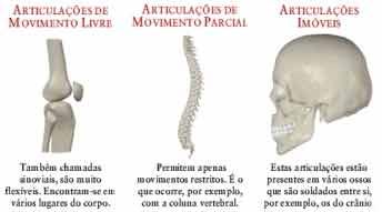ossos articulações