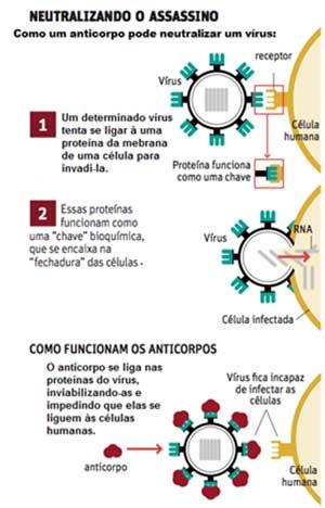 Os Anticorpos e o Sistema Imunológico
