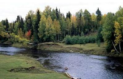 Tipos de vegetação - Geografia