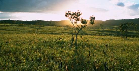 Tipos de vegetação do Continente Americano (Parte II) Geografia- Enem