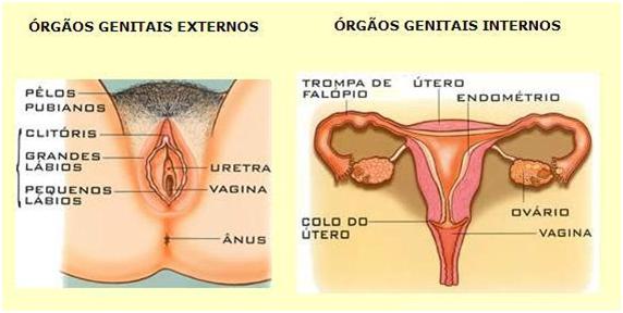 Biologia Enem: Revise o sistema genital feminino