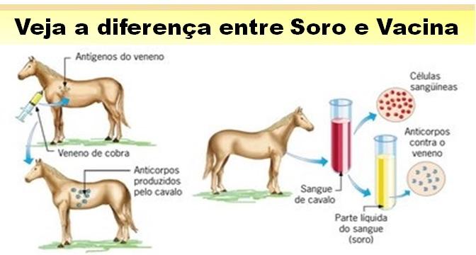 diferença entre soro e vacina
