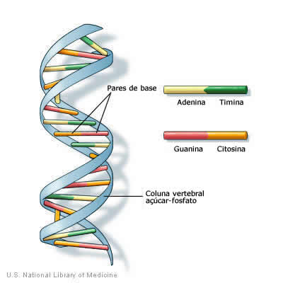 Dupla hélice - Exercícios sobre DNA e RNA