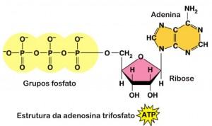Biologia ATP