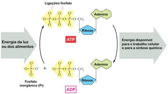 Produção de ATP