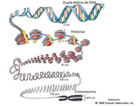 Biologia DNA - Blog do Enem