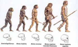 A Teoria da Evolução das Espécies