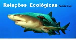 relações ecológicas destacada
