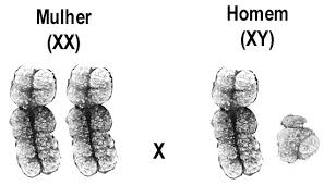 cromossomos unesp