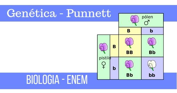 quadro de punnett