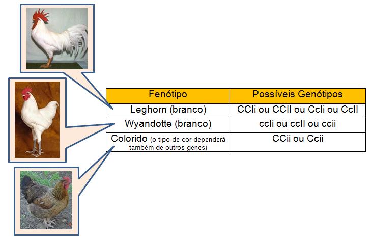 Epistasia - cores de penas de galinhas