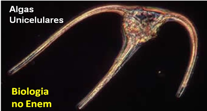 alga unicelular