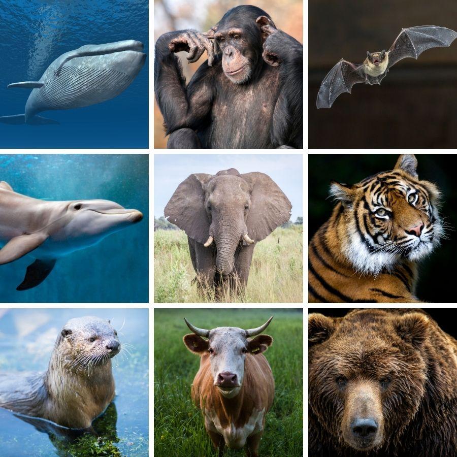 Exemplos de mamíferos