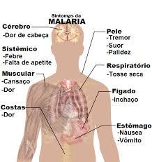 o ciclo da malária