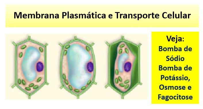 Transporte Celular e membrana plasmática