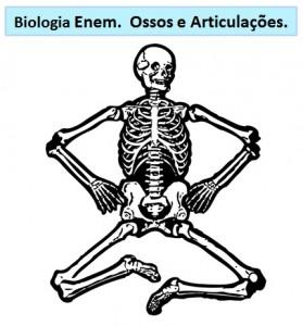 ossos e articulações no Esqueleto Humano