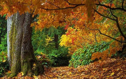 Vegetação do continente americano - Floresta temperada
