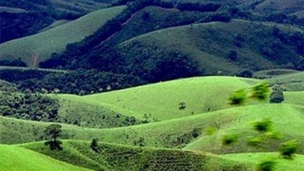 Vegetação do continente americano - Pradarias