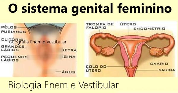 O SIstema Genital Feminino